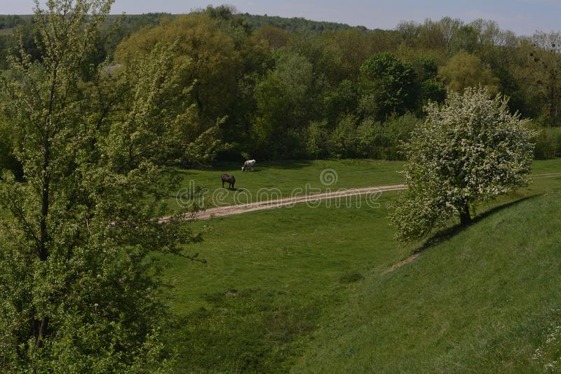 Ein Pferd und eine Kuh essen Gras nahe einem grünen dichten Wald lizenzfreie stockbilder