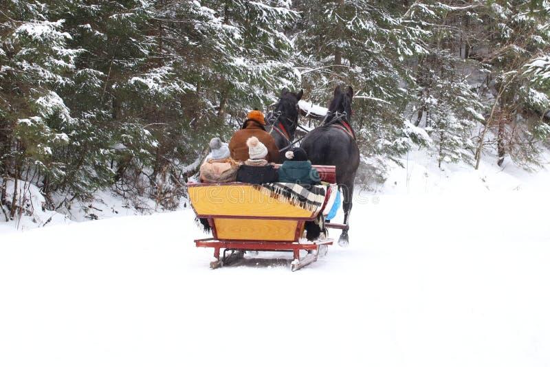 Ein Pferd zieht einen Pferdeschlitten mit Leuten entlang einer schneebedeckten Straße eines Winterkiefernwaldes, den Retro- Trans lizenzfreie stockfotos