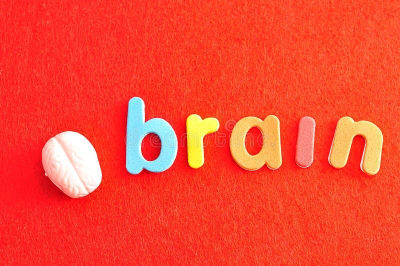 Ein Plastikmodell eines menschlichen Gehirns mit dem Wortgehirn lizenzfreie stockbilder