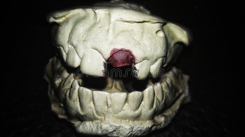 Ein Porträt von Zähnen stockbild