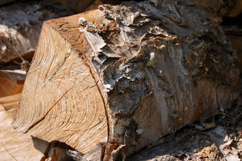 Ein Protokoll des Holzes stockbild
