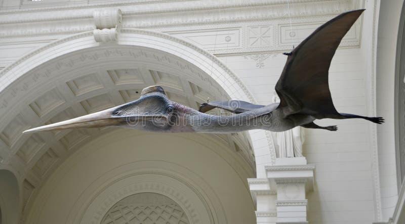 Ein Pterosaur lizenzfreie stockfotos