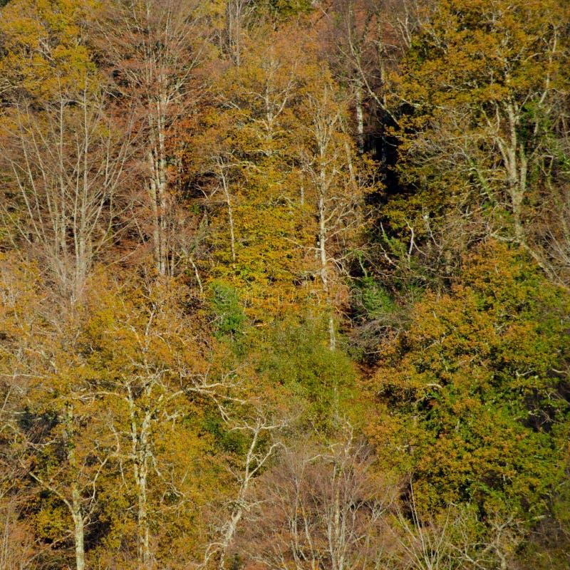 Ein Quadrat des gesunden Waldes lizenzfreies stockfoto