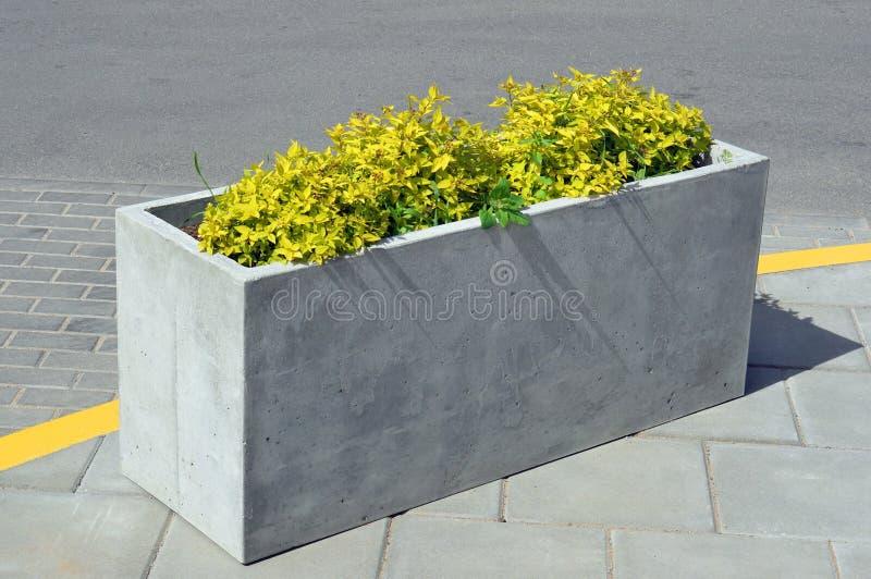 Ein rechteckiger konkreter Blumentopf mit einer gelben Anlage lizenzfreie stockbilder