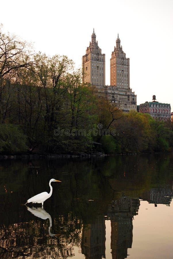 Ein Reiher in New York City stockbild