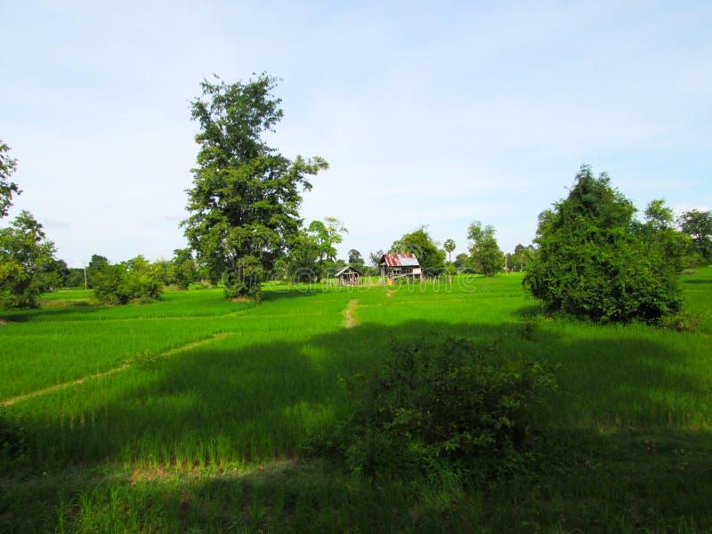 Ein Reisfeld ist ein überschwemmtes Paket des Ackerlandes benutzt für wachsenden semiaquatic Reis lizenzfreies stockbild