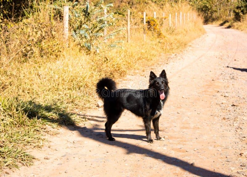 Ein reizender Hund, der mich Firma auf dem Weg hielt lizenzfreie stockfotos
