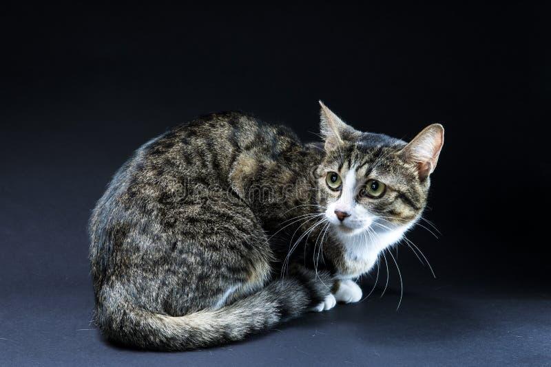 Ein reizender Katzenschwarzhintergrund stockbild
