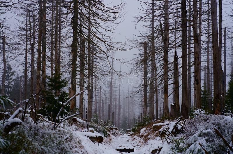 Ein romantischer Wanderweg im Winterwald stockbilder