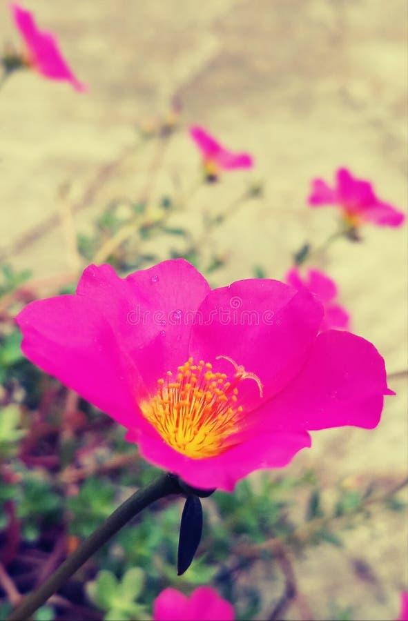 Ein rosa Hirsch lizenzfreie stockbilder