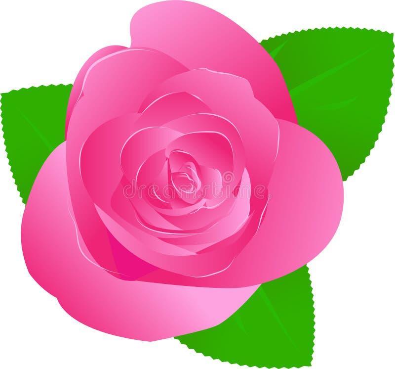 Ein Rosa stieg stock abbildung