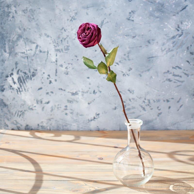 Ein Rosa stieg Blume mit langem Stamm und grüne Blätter im runden GlasVase auf Holztisch auf grauem Hintergrundabschluß oben, Son stockfotografie
