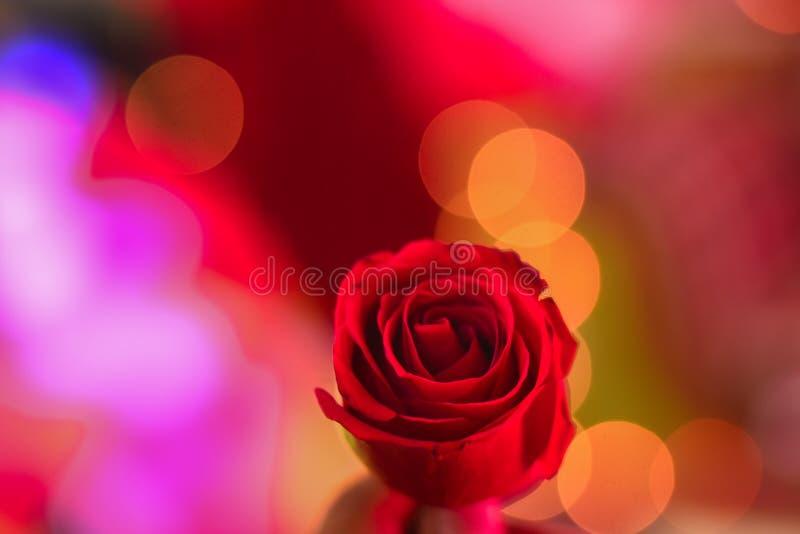 Ein roter rosafarbener Ton ist Optimismus und Jubel stockfotos