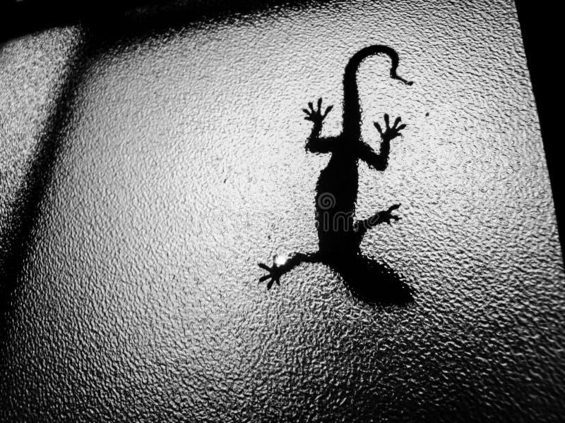 Ein Salamander in einem Fenster stockfotografie