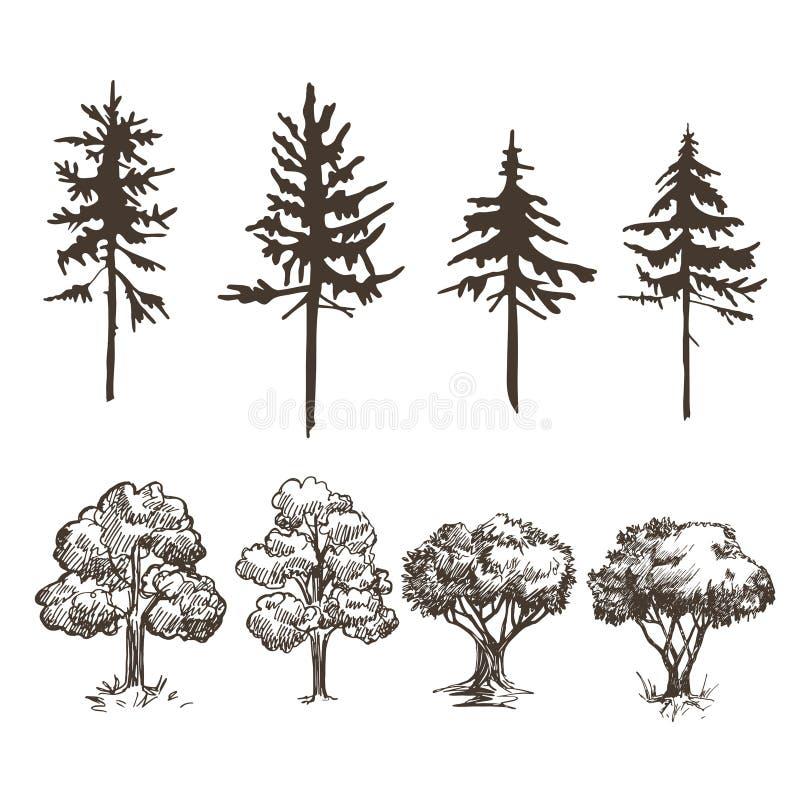 Ein Satz Bilder von verschiedenen Bäumen Laubwechselnd und Koniferen Skizzen und Schattenbilder lizenzfreie abbildung