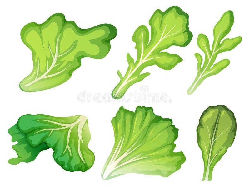Ein Satz des Salat-Blattes stock abbildung