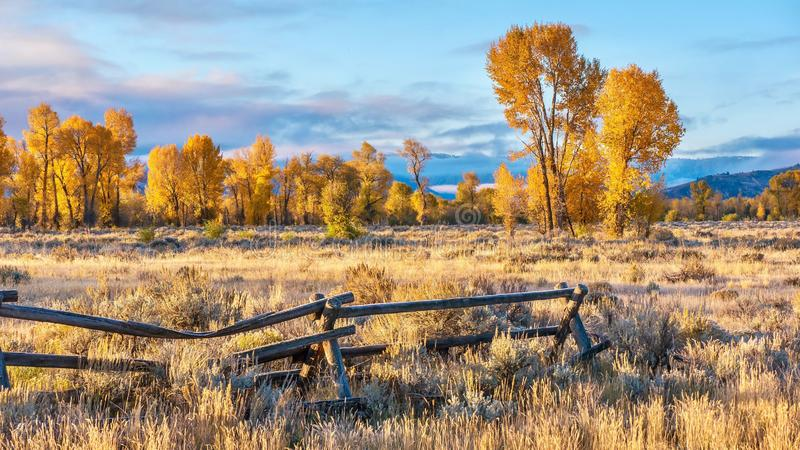 Ein schöner Herbstmorgen in Jackson Hole, Wyoming, mit goldenem Herbstlaub stockfotos