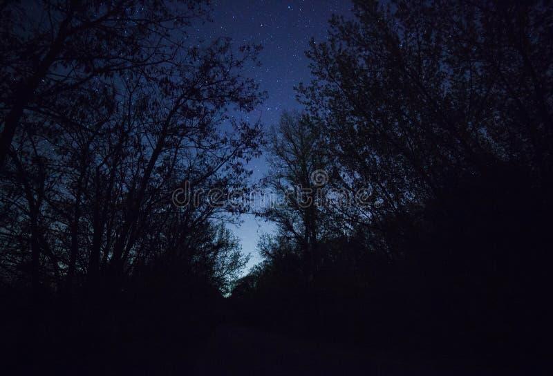 Ein schöner nächtlicher Himmel, die Milchstraße und  Bäume lizenzfreie stockfotos