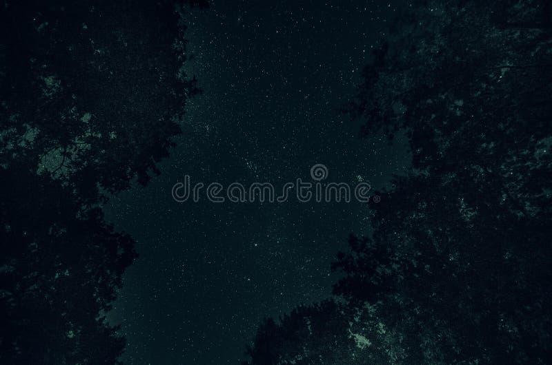 Ein schöner nächtlicher Himmel, die Milchstraße und die Bäume lizenzfreie stockfotos