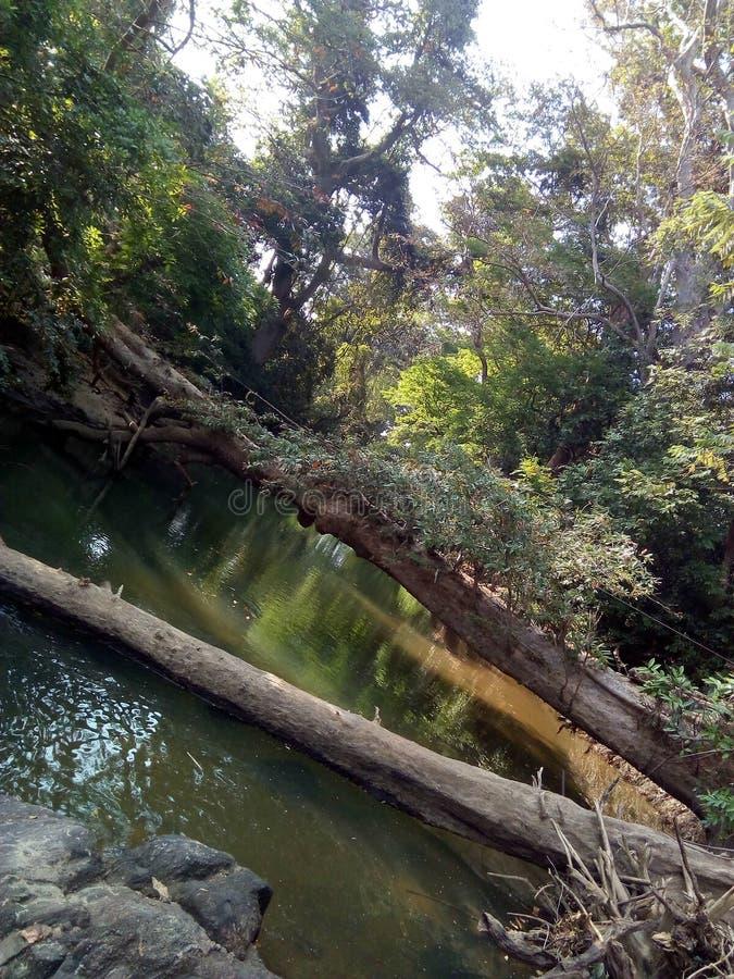 Ein schöner natürlicher Fluss und eine Baumbrücke in Sri Lanka stockfoto