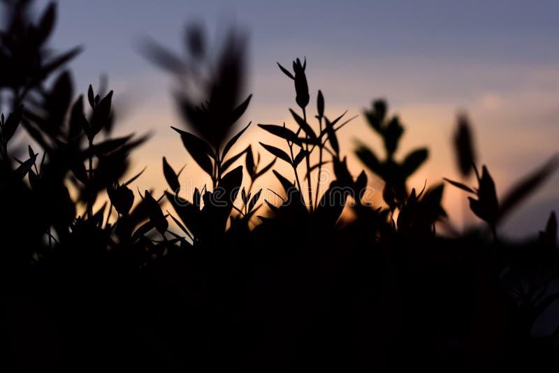 Ein schöner Sonnenuntergang um mein Haus stockbilder