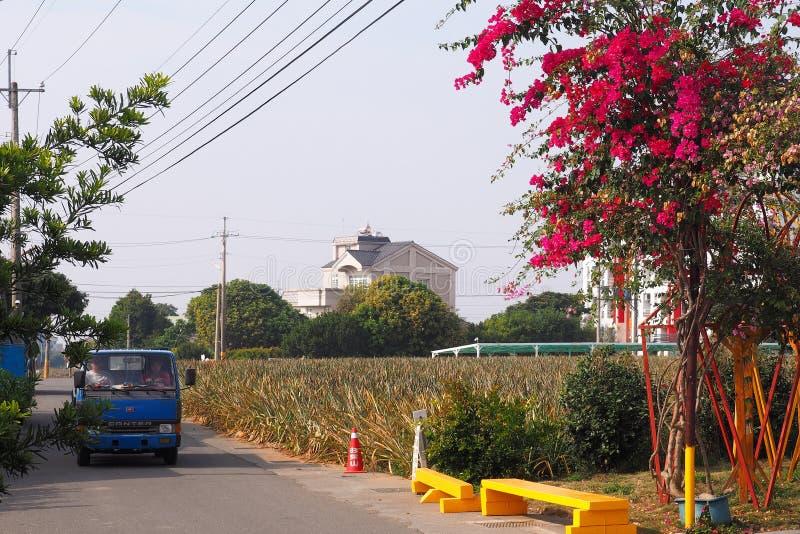 Ein schöner sonniger Tag auf dem Ananas-Hügelananasbauernhof stockfotografie