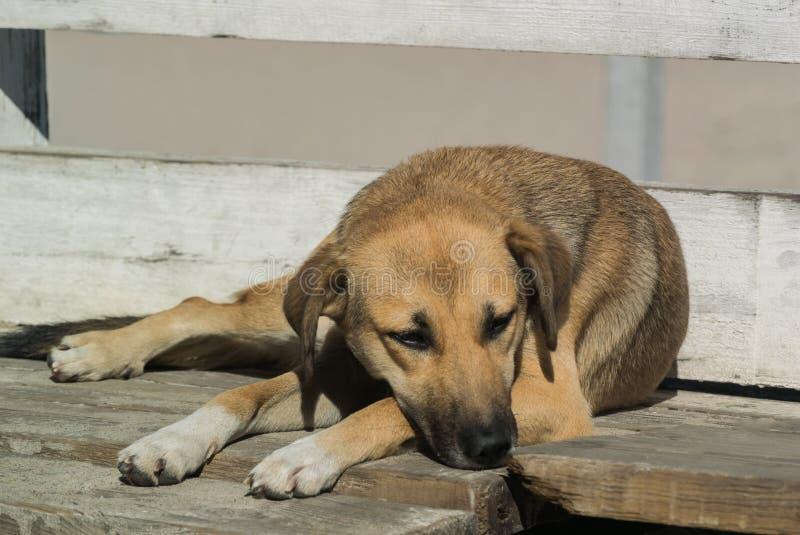 Hund Trauriger Blick