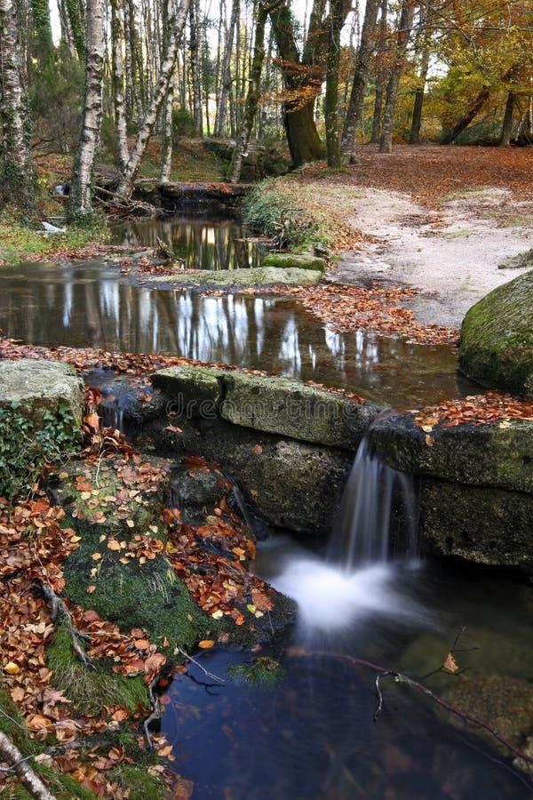 Ein schönes Bild eines Nationalparks, wo das Na lizenzfreie stockfotos