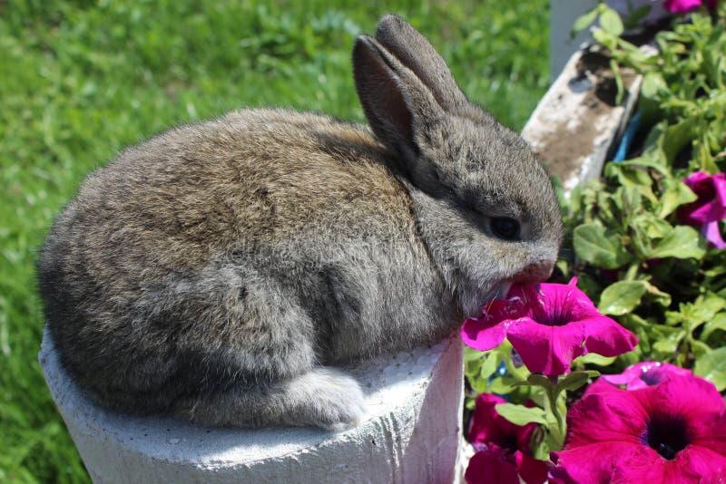 Ein schönes Kaninchen lizenzfreies stockfoto