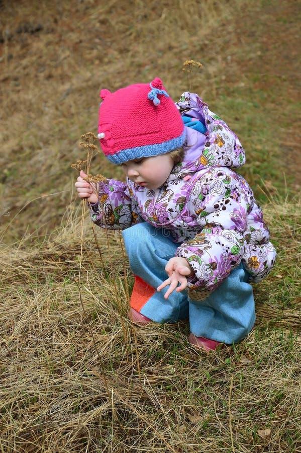Ein schönes kleines Mädchen mit drei Jährigen sammelt Trockenblumen und betrachtet sie auf Ihren Fingern stockbild