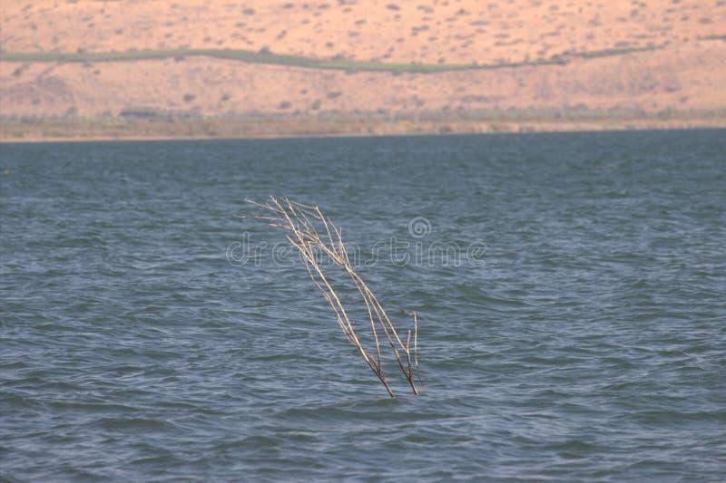 Ein Schlüssel ist vom See wachsend lizenzfreies stockbild