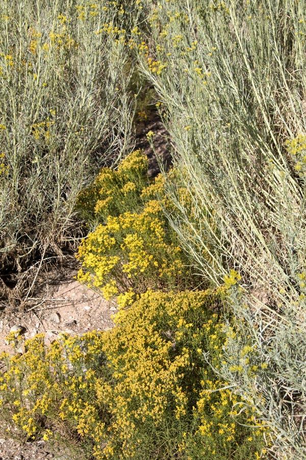 Ein Schleichweg durch die trockenen Kaktuspflanzen stockfotos