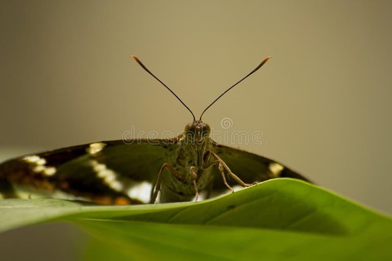 Ein Schmetterling lizenzfreies stockbild