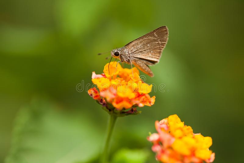 Ein Schmetterling auf Blume stockfotos