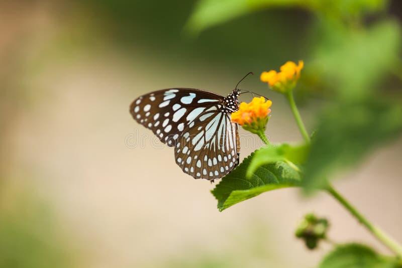 Ein Schmetterling auf Blume lizenzfreie stockbilder
