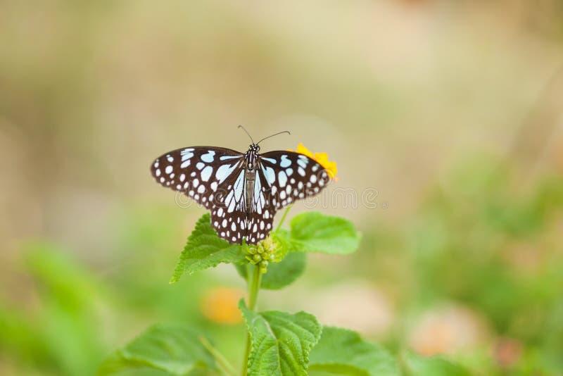 Ein Schmetterling auf Blume lizenzfreies stockbild