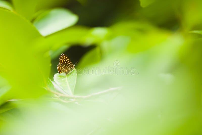 Ein Schmetterling auf einem Blatt stockfoto
