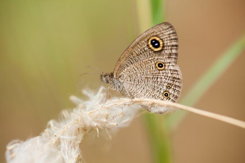 Ein Schmetterling auf Gras stockfoto