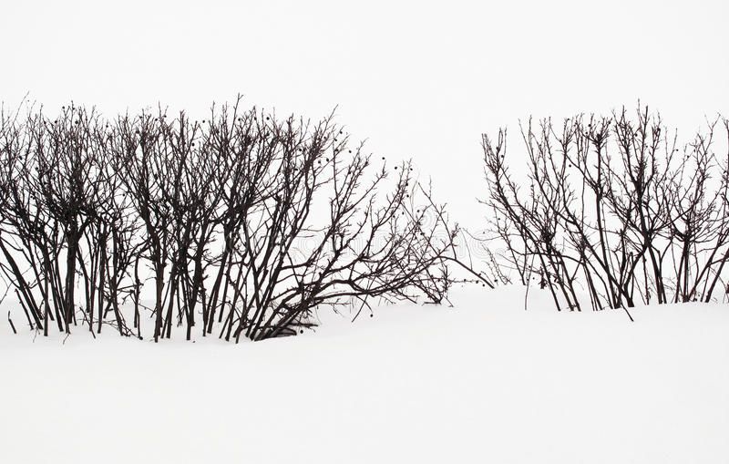 Ein Schnee-Szenen-Hecken-Schattenbild lizenzfreies stockbild