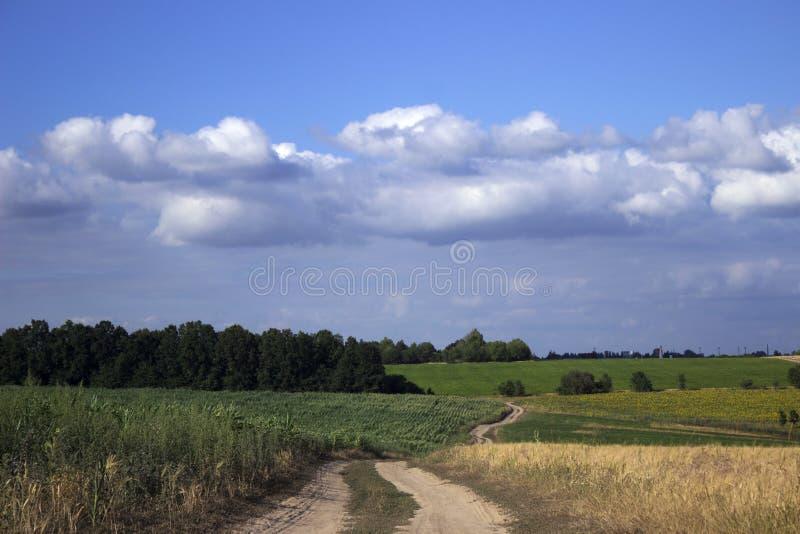 Ein Schotterweg auf einem Gebiet unter dem reifen Weizen, den Sonnenblumen und dem cornA Schotterweg auf einem Gebiet unter dem r lizenzfreies stockfoto