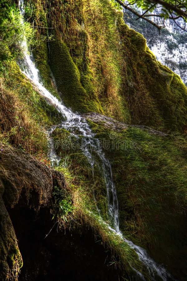 Ein Schuß der Natur lizenzfreie stockbilder