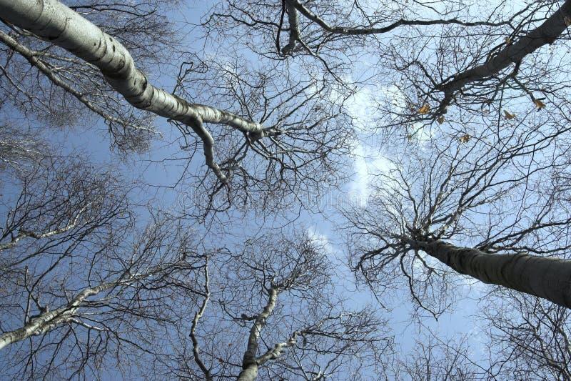 Ein Schuß, der oben dem Himmel betrachtet stockbilder