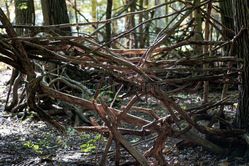 Ein Schutz gemacht von den hölzernen Niederlassungen im Wald lizenzfreie stockbilder