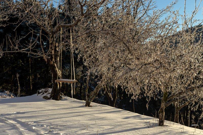 Download Ein Schwingen Im Wald An Einem Winterabend Stockbild - Bild von gebirgig, horizont: 106802945