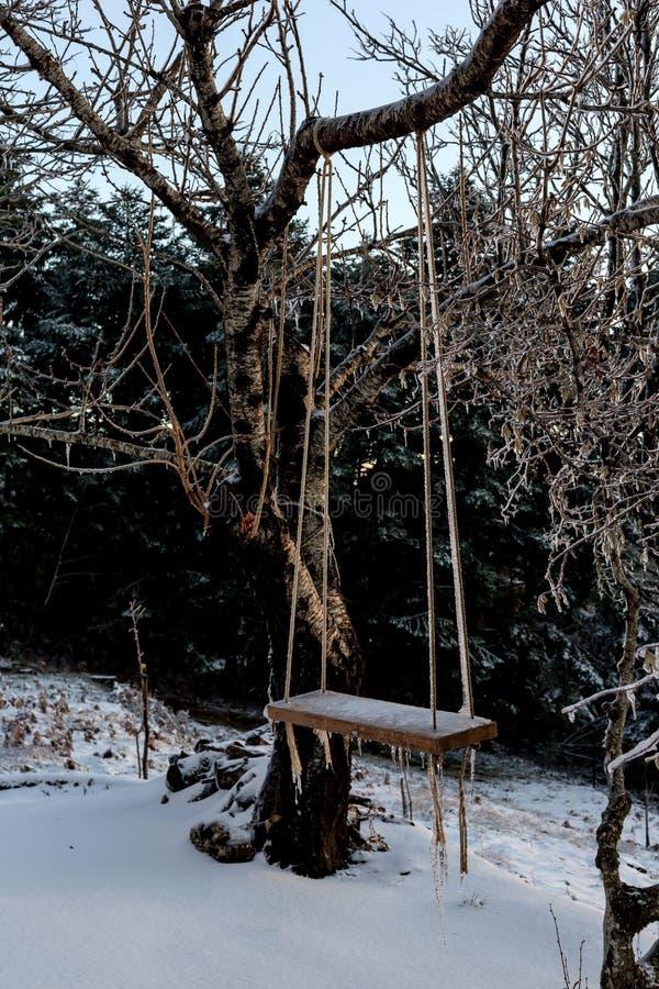 Download Ein Schwingen Im Wald An Einem Winterabend Stockfoto - Bild von stelle, flora: 106803580