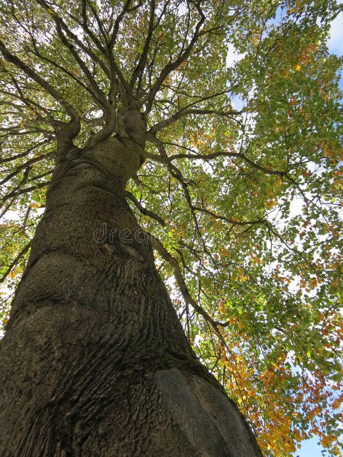 Ein sehr alter Baum stockfoto