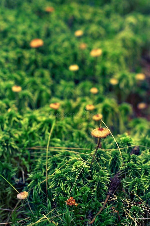 Ein sehr schöner Pilzgiftpilz mit den Darmzotten auf einem Hut steht auf einem dünnen Stiel im Gras mit einem unscharfen Hintergr stockfotos