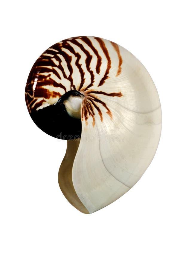 Ein Shell vom weißen Hintergrund stockfotografie