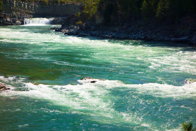 Ein sich schnell bewegender Fluss am Glazial- Nationalpark stockfoto