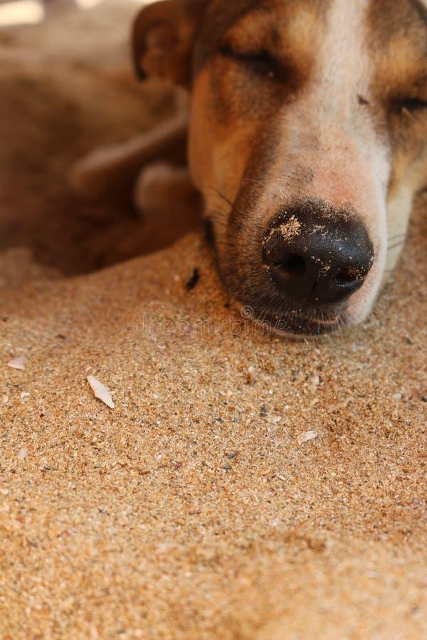 Ein sleepping Hund stockfoto